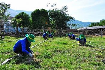 Đoàn Thanh niên PVFCCo: Nặng tình với đồng ruộng
