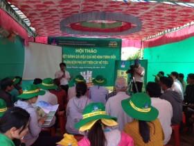 Hiệu quả của phân bón Phú Mỹ trên cây hồ tiêu tại Bình Phước