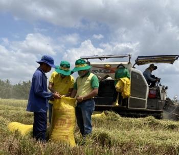 """Nông dân phấn khởi trước kết quả của chương trình canh tác lúa """"thông minh"""""""