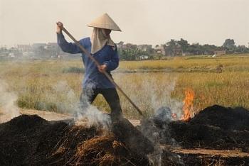 Hà Nội kiểm tra tình trạng đốt rơm rạ