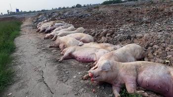 Hỗ trợ người chăn nuôi, doanh nghiệp bị thiệt hại do bệnh dịch tả lợn châu Phi