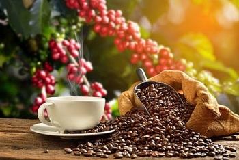 Giá cà phê hôm nay 25/2: Thị trường thế giới diễn biến trái chiều