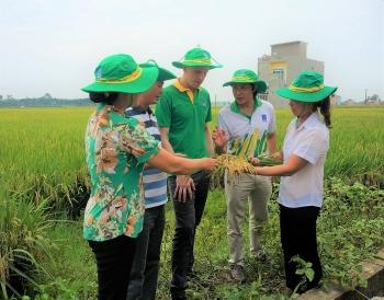 [Chùm ảnh] Phân bón Phú Mỹ được người nông dân tin dùng