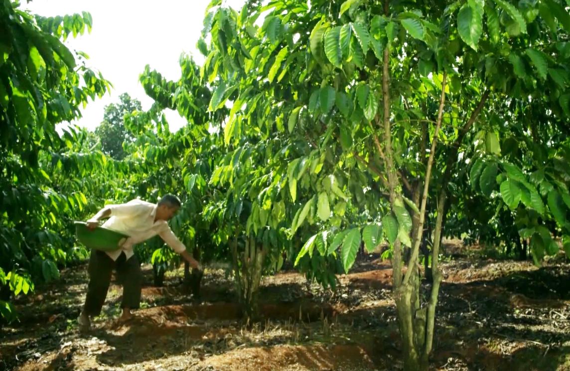 Bao giờ sửa Luật thuế GTGT về phân bón để nông dân và doanh nghiệp được nhờ?